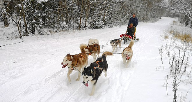 husky sledding in riga